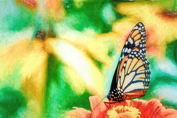 Photograph - Peaceful Monarch Butterfly by Don Northup