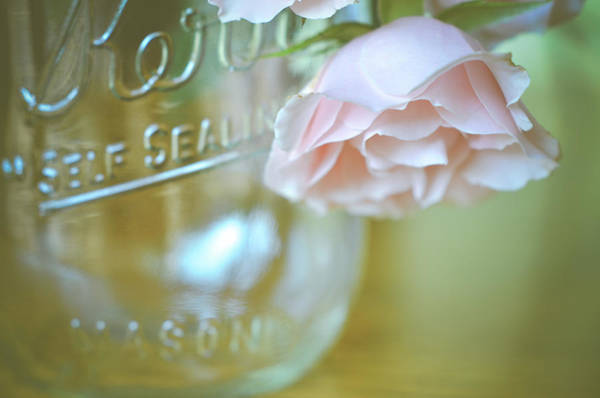 Photograph - Peaceful Morning by Michelle Wermuth