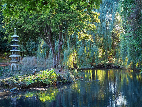 Photograph - Peaceful Oasis - Japanese Garden Lake by Gill Billington