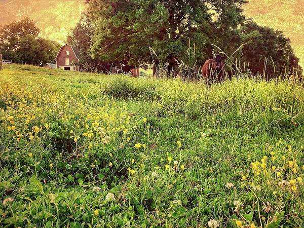 Photograph - Peaceful Pastoral Perspective by Carol Whaley Addassi