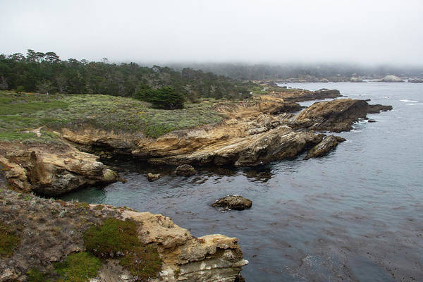 Photograph - Peaceful Point Lobos by Marie Leslie