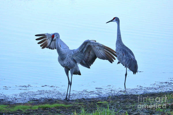Wall Art - Photograph - Peaceful Sandhill Scene  by Carol Groenen