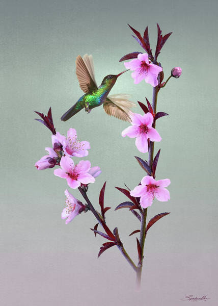 Wall Art - Digital Art - Peach Blossoms And Hummingbird by Spadecaller
