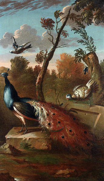 Wall Art - Painting - Peacock And Other Birds In A Wooded Setting by Follower of Pieter Casteels
