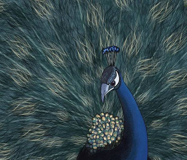 Drawing - Peacock Streamlined by Joan Stratton