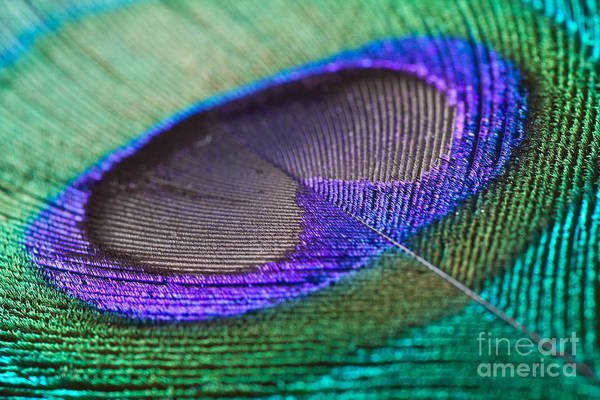 Wall Art - Photograph - Peacock Feather Closeup by Clickmanis