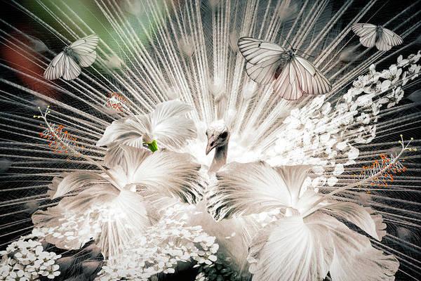 Digital Art - Peacock In Dreams by Debra and Dave Vanderlaan