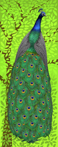 Painting - Peacock In Tree, Lime Green, Tall by David Arrigoni