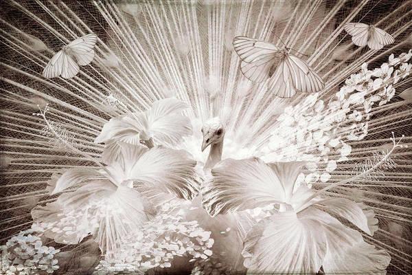 Digital Art - Peacock In Vintage by Debra and Dave Vanderlaan