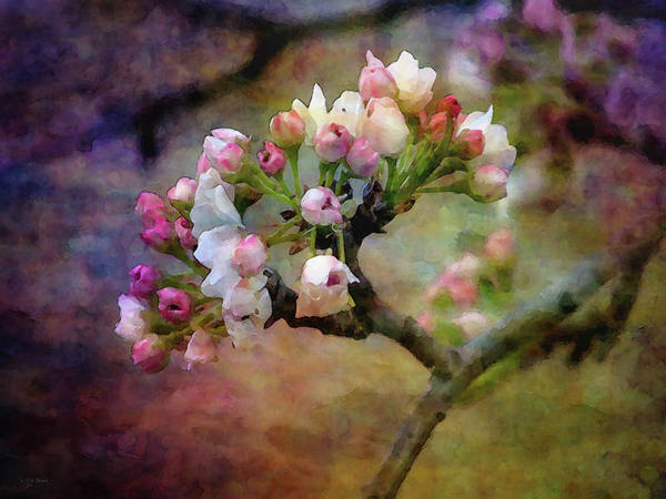 Photograph - Pear Blossoms 19 6191 Idp_2 by Steven Ward