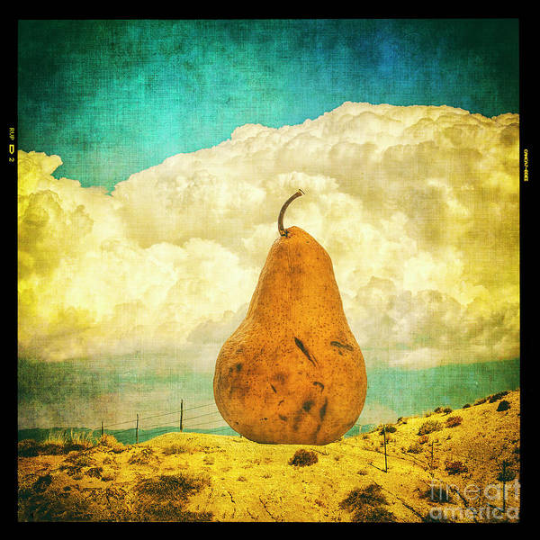 Photograph - Pear In The Landscape by Terry Rowe