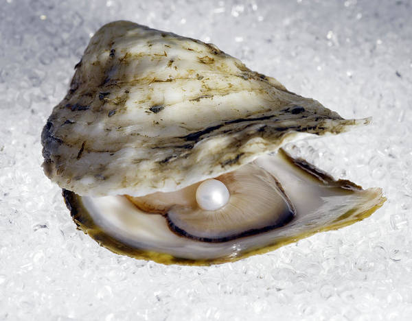 Wall Art - Photograph - Pearl In Open Oyster by Jeffrey Coolidge