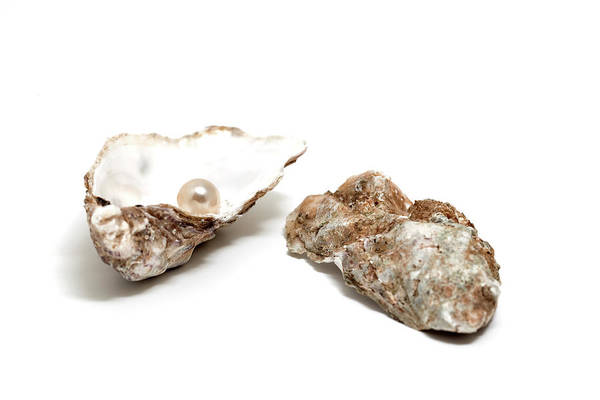 Wall Art - Photograph - Pearl In Shell by Ursula Alter
