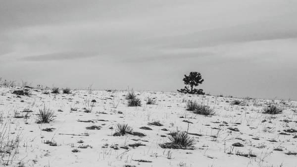 Photograph - Peekaboo by Dan Urban