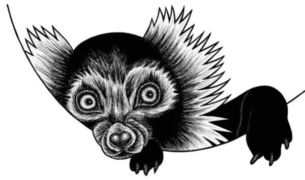 Lemur Wall Art - Drawing - Peeking Lemur - Ink Illustration by Loren Dowding
