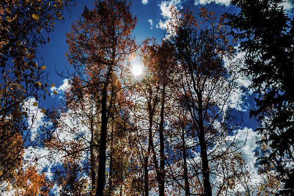 Photograph - Peeking Through by Dennis Dempsie