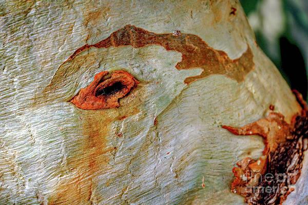 Wall Art - Photograph - Peeling Tree Trunk Close-up K2 by Vladi Alon