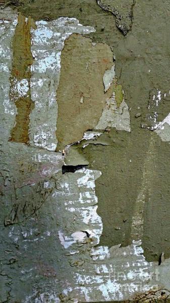Wall Art - Photograph - Peeling Tree Trunk Close-up K5 by Vladi Alon