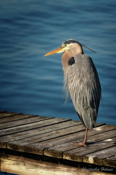 Photograph - Peering Off The Pier by Christopher Holmes