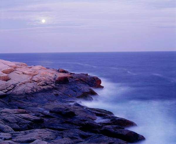 Design Photograph - Peggys Cove In The Moonlight by Design Pics/david Chapman