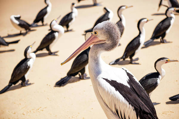 Photograph - Pelican During The Day by Rob D Imagery