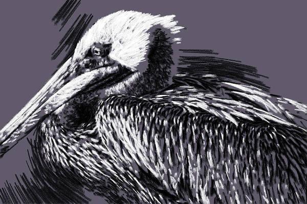 Photograph - Pelican En Charcoal by Alice Gipson
