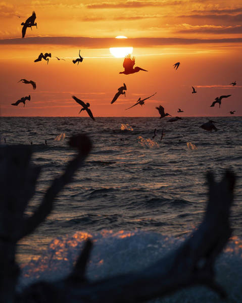 Frenzy Wall Art - Photograph - Pelican Feeding Frenzy by Chris Haverstick