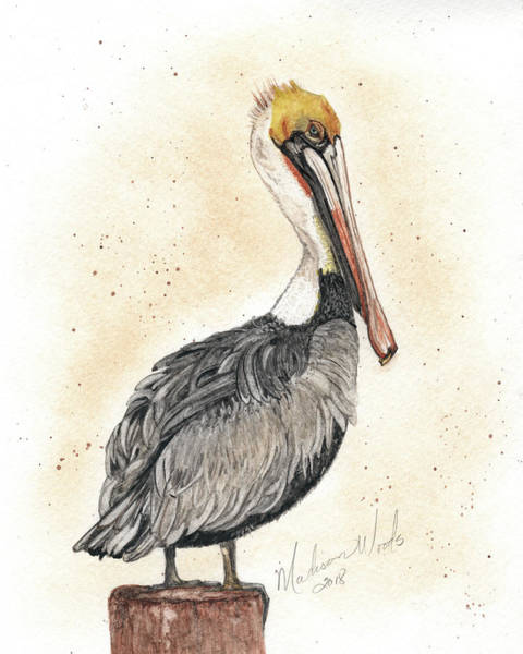 Wall Art - Painting - Pelican No 1 by Madison Woods