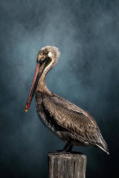 Digital Art - Pelican On A Piling by Cyndy Doty