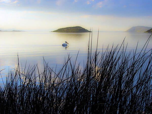 Pelican Wall Art - Photograph - Pelican On Klamath Lake by Christopher Johnson