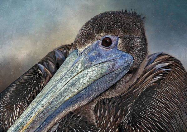 Wall Art - Photograph - Pelican Portrait  by HH Photography of Florida