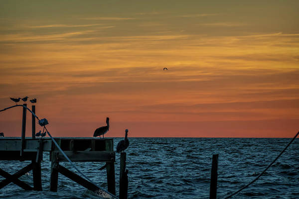 Photograph - Pelican View by David Pine