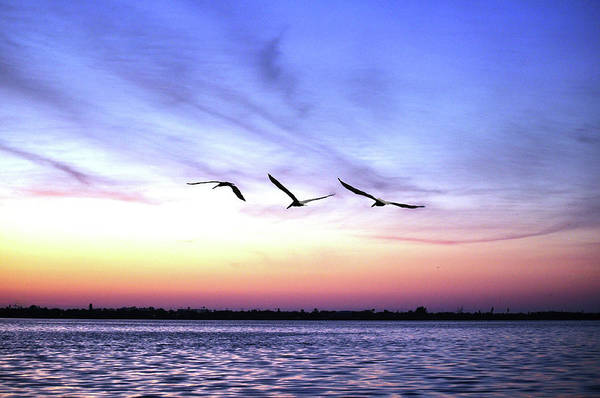 Pelican Island National Wildlife Refuge Wall Art - Photograph - Pelicans At Sunrise by Photo By Ladora Sims
