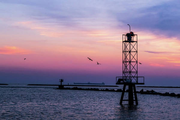 Wall Art - Photograph - Pelicans At Sunset by Suzy Quigley