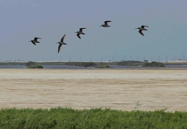 Pelican Island National Wildlife Refuge Wall Art - Photograph - Pelicans Flying At Pea Island by Cathy Lindsey