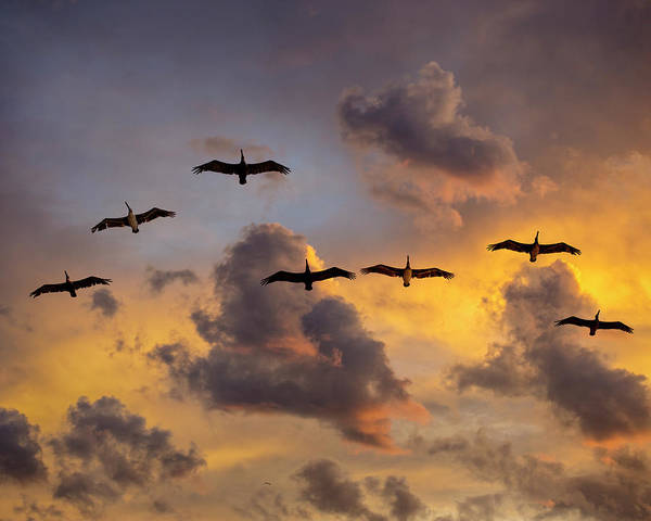 Photograph - Pelicans In The Clouds by John Rodrigues