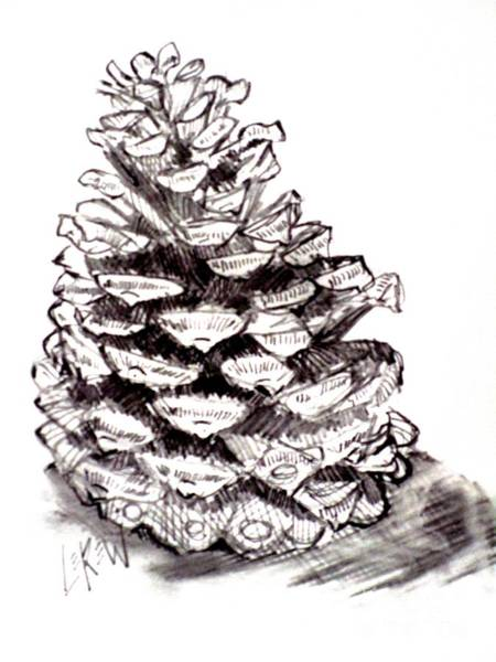 Evergreen Trees Drawing - Pencil Pine Cone by Larry Lerew