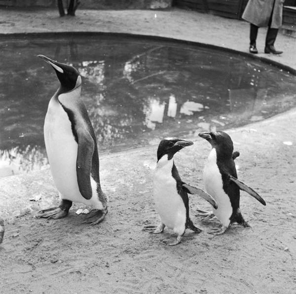 Wall Art - Photograph - Penguin Family by Dennis Rowe