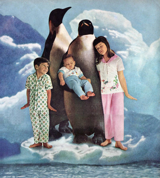 Wall Art - Photograph - Penguins And Human Children by Graphicaartis