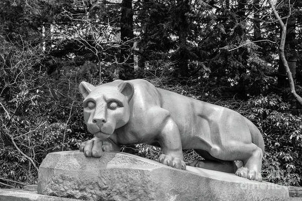 Photograph - Pennsylvania State University Nittnay Lion by University Icons