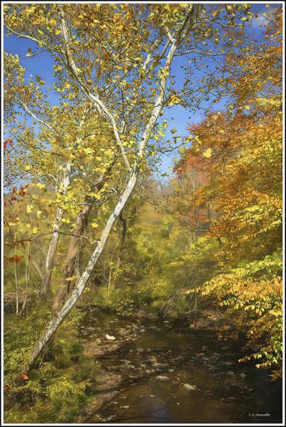 Photograph - Pennypack Creek, Southeastern Pennsylvania, Fall by A Gurmankin