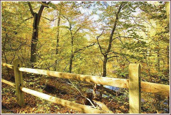 Photograph - Pennypack Park Path, Philadelphia, Autumn by A Gurmankin