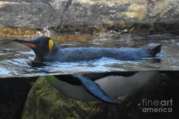 Wall Art - Photograph - Penquin by Skip Willits