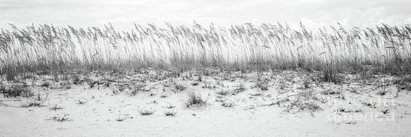 Wall Art - Photograph - Pensacola Beach Beachscape Black And White Panorama Photo by Paul Velgos