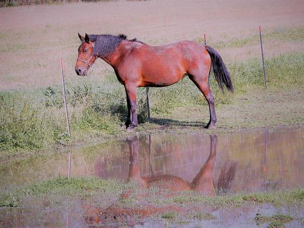 Photograph - Pensive Horse by Tina M Wenger