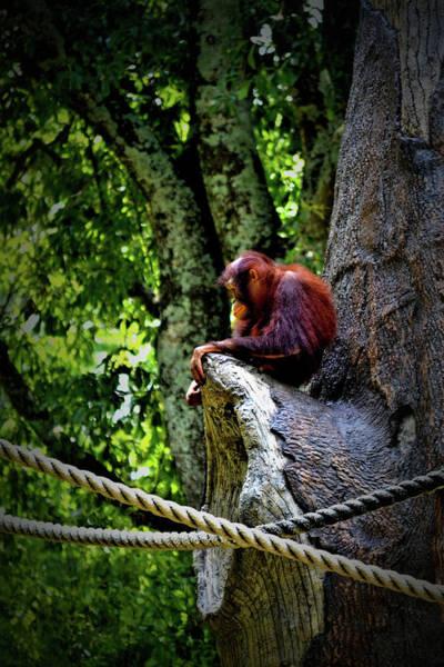 Wall Art - Photograph - Pensive Orangutan by Tara Potts