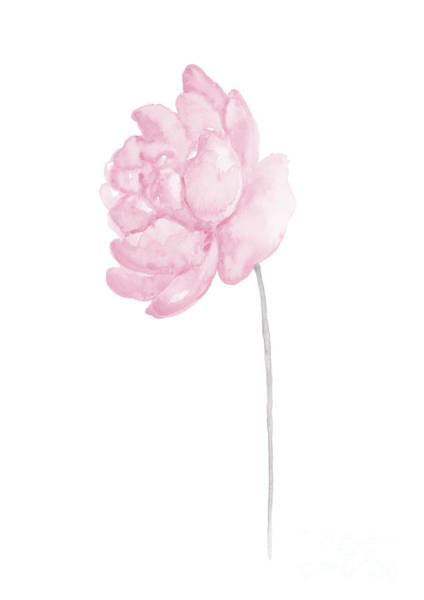 Wall Art - Painting - Peony Baby Pink Flower Illustration by Joanna Szmerdt