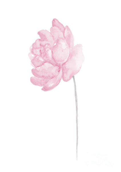 Wall Art - Painting - Peony Baby Pink Flower Wall Decor Watercolor Poster by Joanna Szmerdt