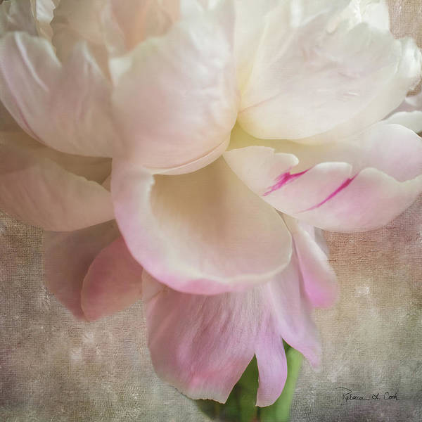 Photograph - Peony Essence by Bellesouth Studio