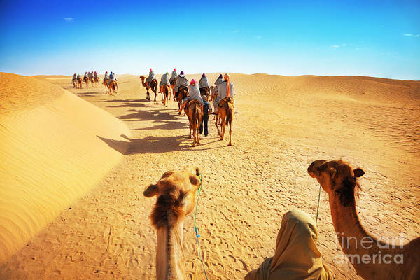 Wall Art - Photograph - People In The Sahara Desert by Adisa